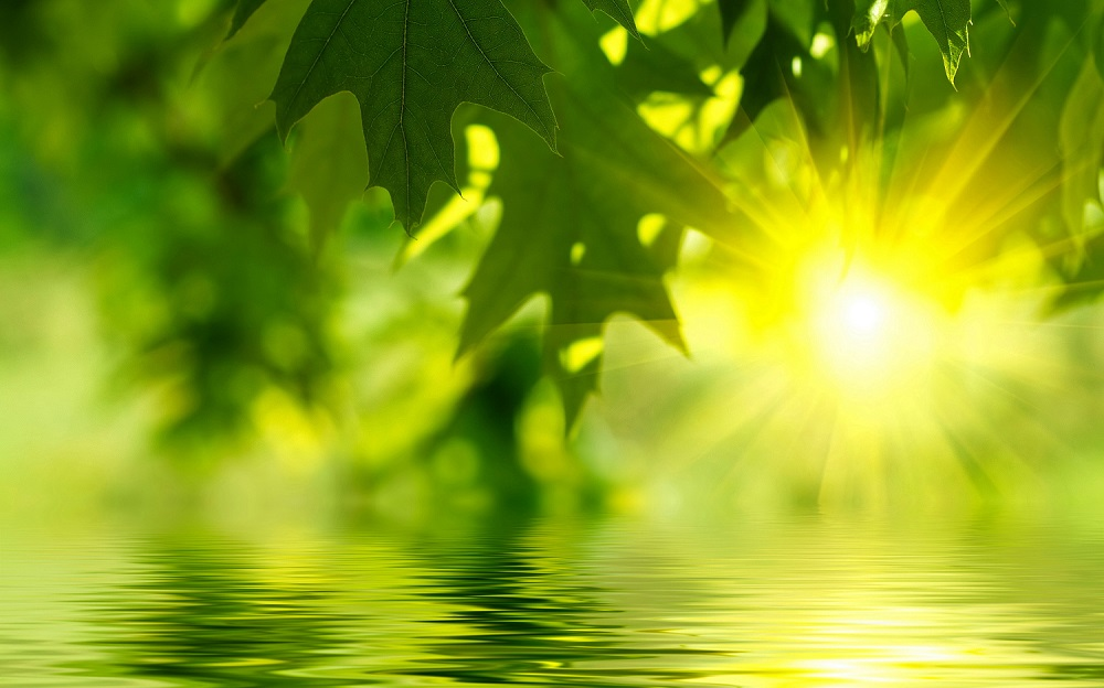 green-tea-leaves-green tea weight loss